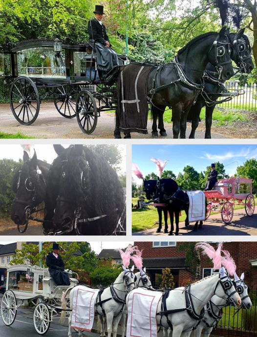Horse Drawn Pink Carriage